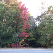 The fall colours are starting