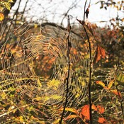 Autumn colours through a cobweb