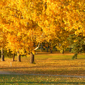 Bassano Alberta fall colours