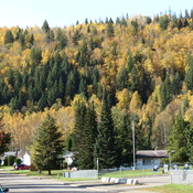 Fall in Prince George