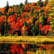 Fall Colours in Haliburton Ontario Photography by Kim Cyr