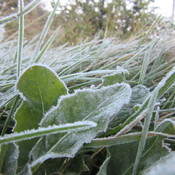 Overnight Frost