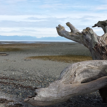 Driftwood at Rathtrevor Beach Provincial Park