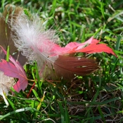 Fallen leaves and blown feathers
