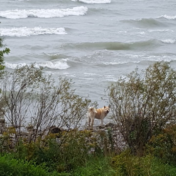 Surfs Up @ Oshawa Harbour