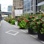 Toronto divides Cyclists from cars with flowers