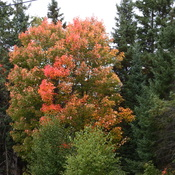 Brilliant fall colours