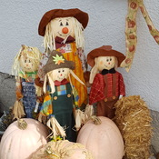 Welcomeing back Fall with pumpkin harvest and some friends!