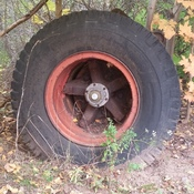 picture of a tire in the woods