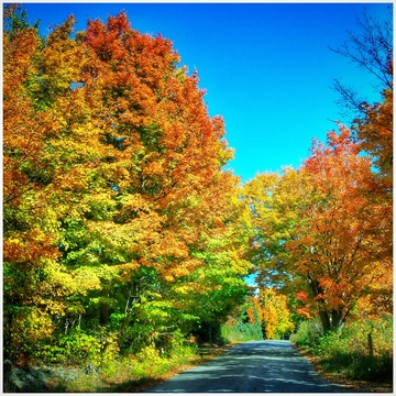 Autumn drive, Kawartha