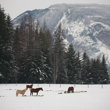Horses in Salmon Arm, B.C.
