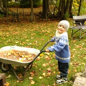 Picking up Leafs at Great Papadads in Bancroft ,Ontario