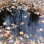 fall puddles