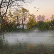 Morning Mist in the Fields