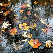 Swimming Leaves