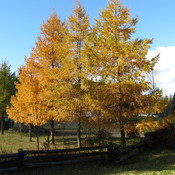Fall at Canim Lake BC