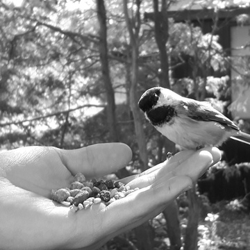 Feeding birds at The Bog, Ottawa