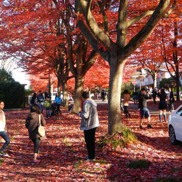 Fall on Cambridge Street, Vancouver