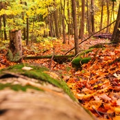 Last Fall Photos from Hockley Valley