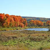 Marshland in the fall