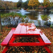 autumn leaves picnic at Bowring Park, St. John's NL