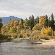 Fall at the Adams River