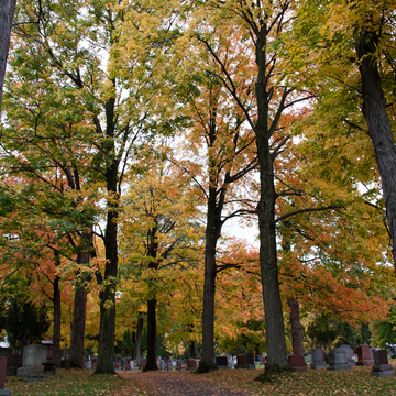 A Beautiful walk in the cemetery
