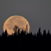 Moon over the Boreal Firest