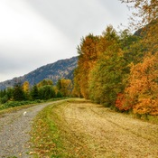 Fall Colours along Sumas River, Abbotsford, BC