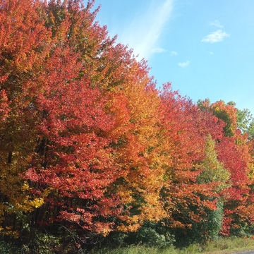 Fall colours!