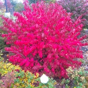 fire bush one example how temperature change nature