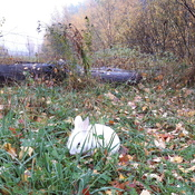 surpris un lapin en bordure de route