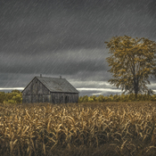 Old Barn in the Rain
