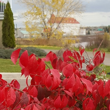 Autumn in Moncton