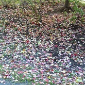 Bed of colourful leave