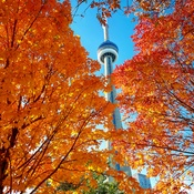 Fall Colors in Toronto!! 😊🍁🍁