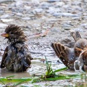 Bird having fun in a small pond