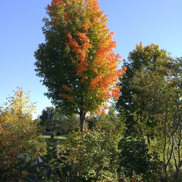 Fall colours are in the trees