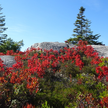 Fall colours at The Bluff