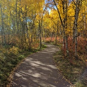 Fall day in Alberta
