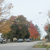 Fall colours in Orillia
