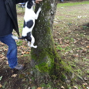 how to climb tree's