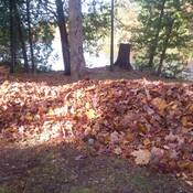 A lot of leaves