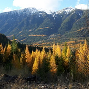 Fall in Cranbrook BC area