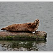 Resident of Cowichan Bay