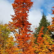 Algonquin park in the fall.