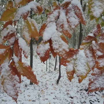 autumn colors in snow