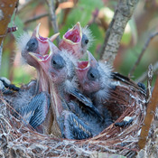 New Borns Finches