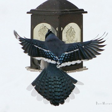 To the feeder