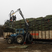 The last load of Christmas trees Going to the USA